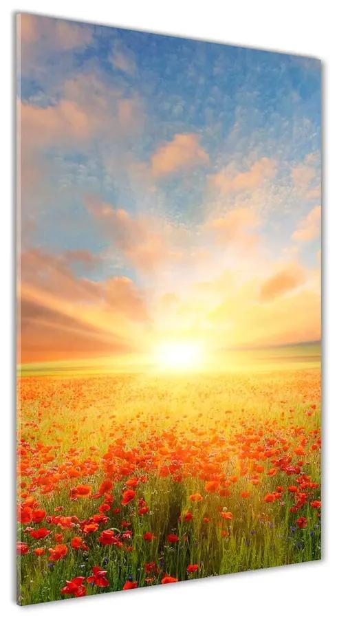 Foto obraz akrylový na stenu Pole makov pl-oa-70x140-f-65829661