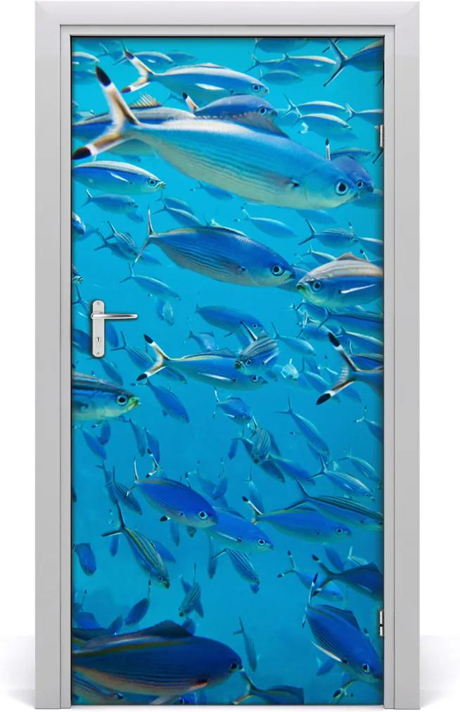 Samolepící fototapeta na dveře Korálové ryby