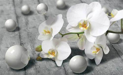 Vliesové fototapety, rozmer 416 x 254 cm, orchidea, IMPOL TRADE 3013 VO XXXL