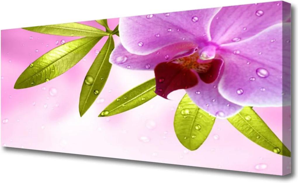 Obraz na plátně Květ listy rostlina