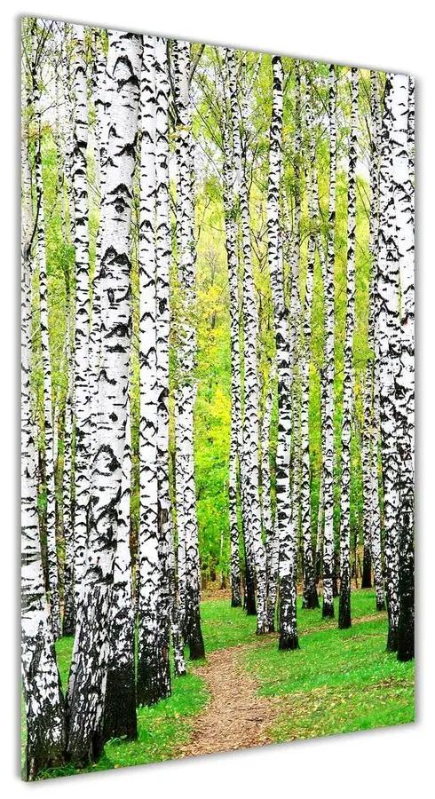 Moderný akrylový fotoobraz Brezový les pl-oa-70x140-f-45594728