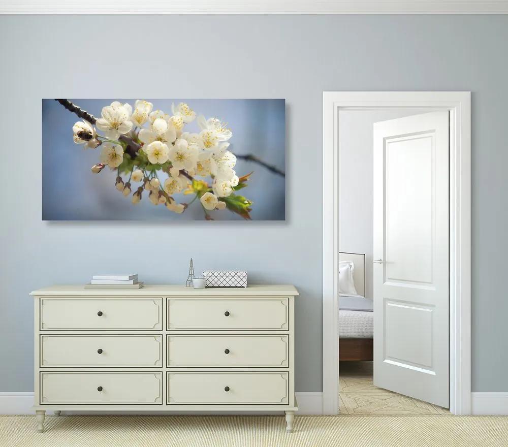 Obraz kvitnúci konárik čerešne