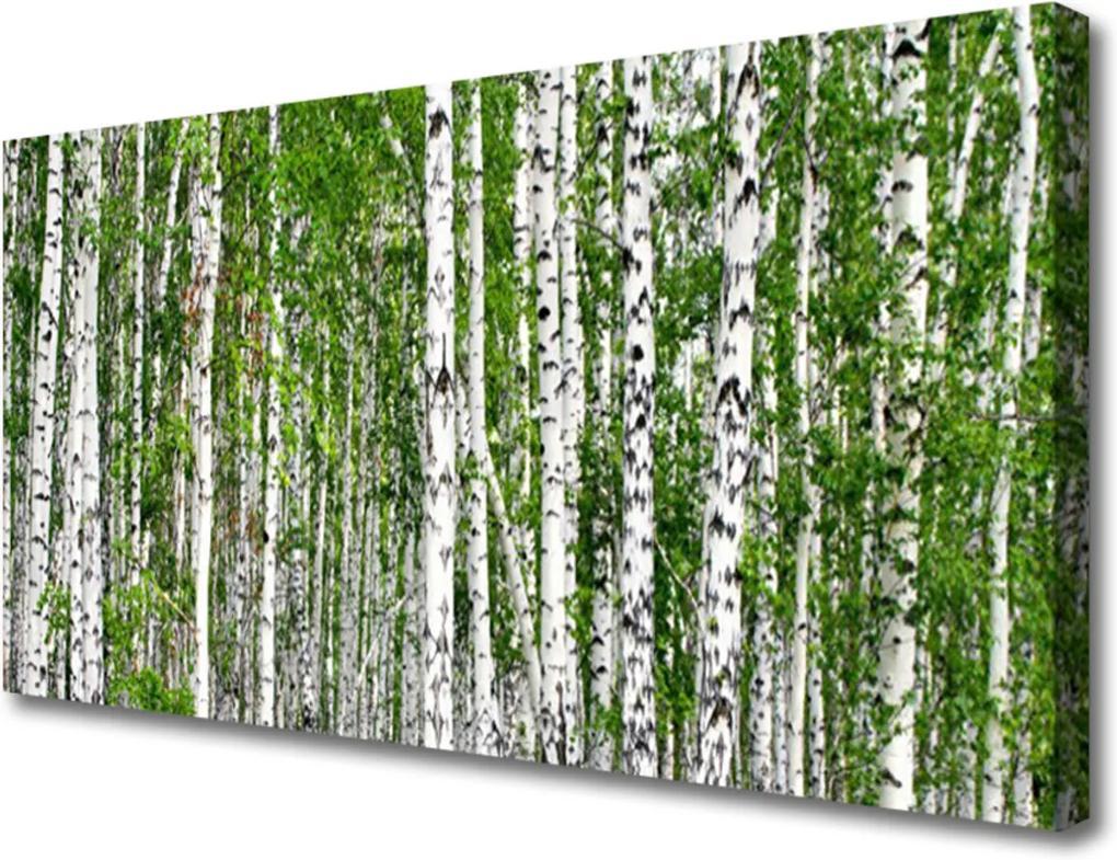 Obraz na plátně Breza Les Stromy Príroda