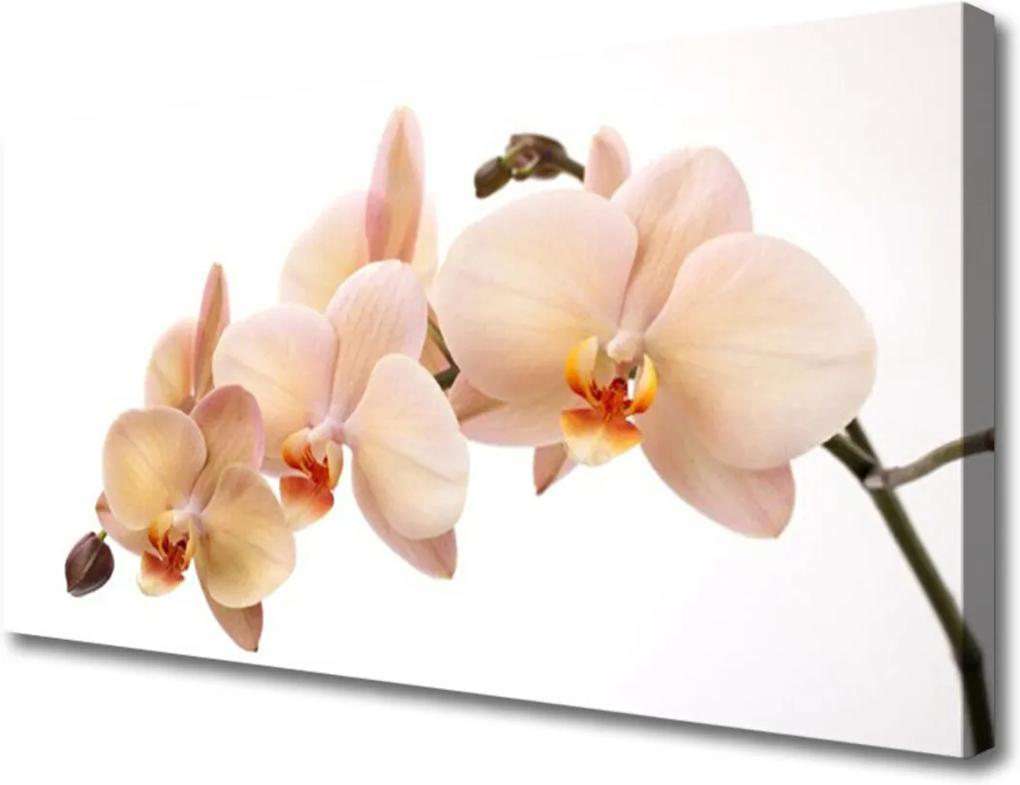 Obraz na plátně Skleněný květiny rostlina