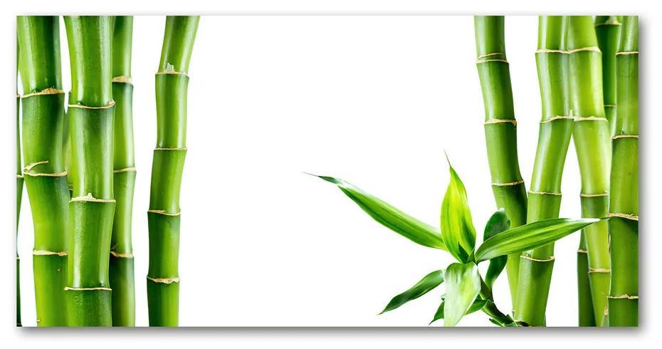 Moderný akrylový fotoobraz Bambus pl-oa-140x70-f-68827460