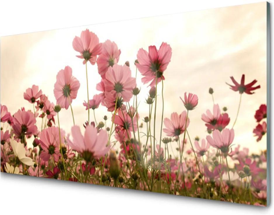 Sklenený obklad Do kuchyne Poľné Kvety Lúka Príroda
