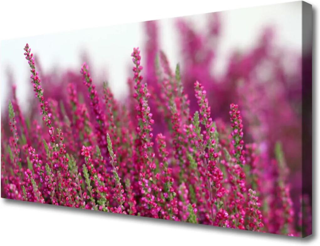 Obraz Canvas Kvety Lúka Príroda