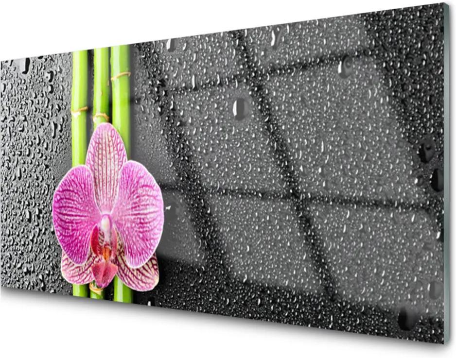 Plexisklo obraz Bambus květ rostlina příroda