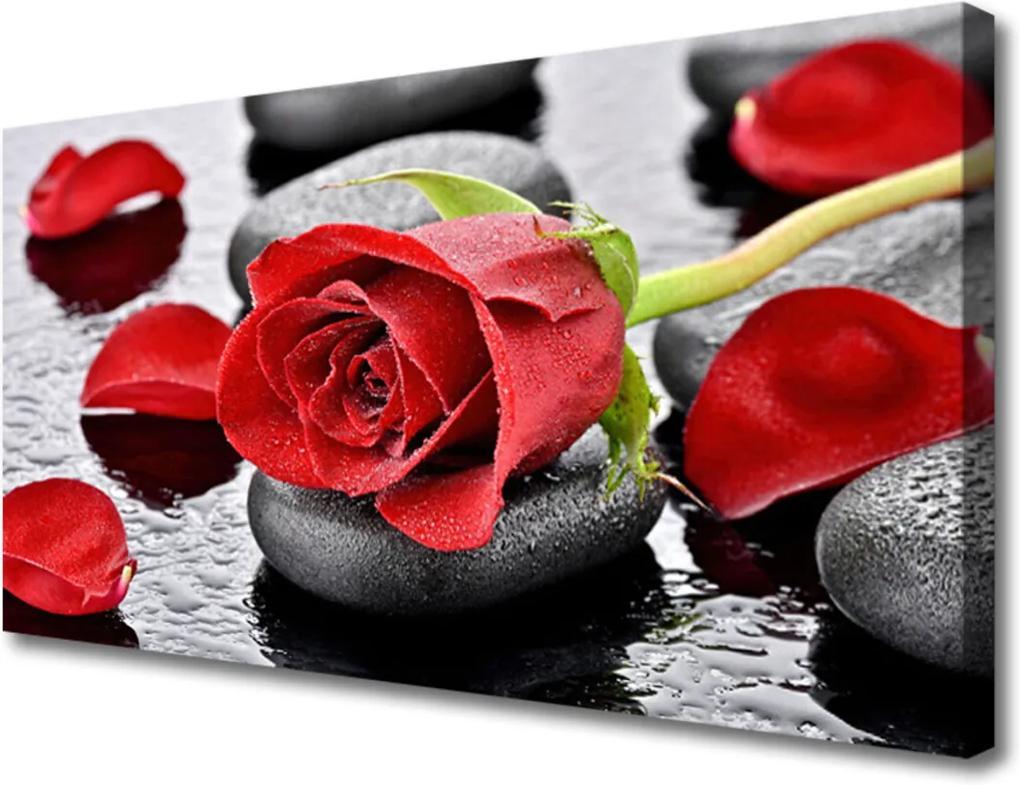 Obraz Canvas Růže květ kameny zen