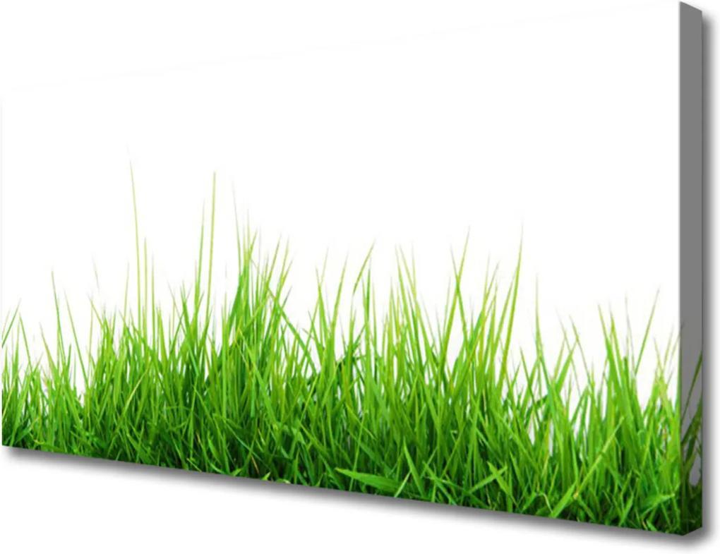 Obraz Canvas Tráva Príroda Rastlina