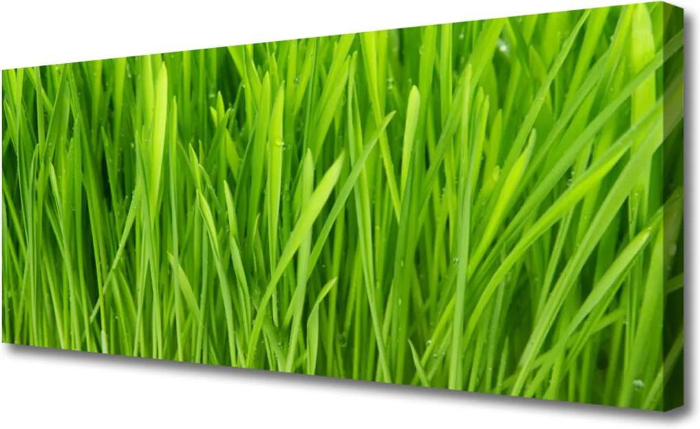 Obraz na plátně Tráva rostlina příroda