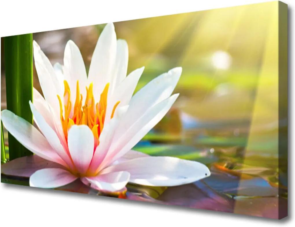 Obraz na plátně Kvety Rastlina Príroda