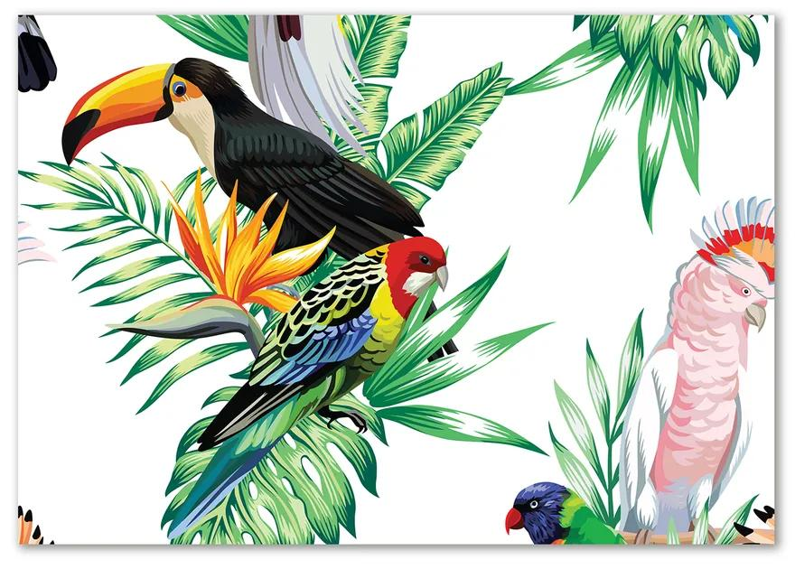 Foto obraz sklo tvrdené Tropické vtáky pl-osh-100x70-f-82973697