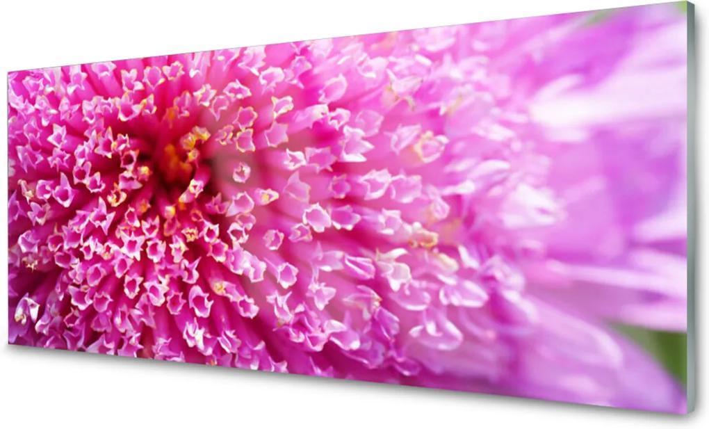 Obraz na akrylátovom skle sklenený Kvet