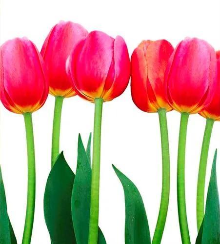 Vliesové fototapety, rozmer 225 cm x 250 cm, tulipány, DIMEX MS-3-0126