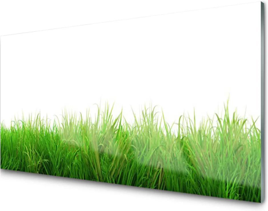 Sklenený obklad Do kuchyne Tráva Rastlina Príroda