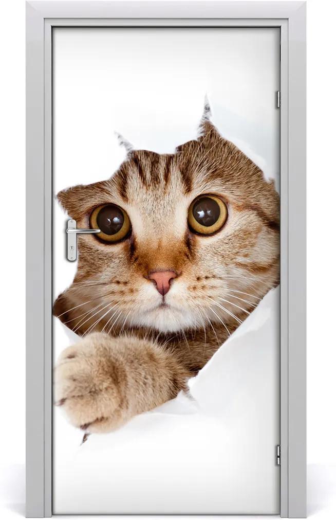 Samolepící fototapeta na dveře Kočka