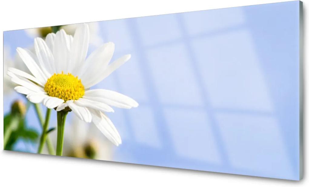 Skleněný obraz Sedmikráska rostlina příroda