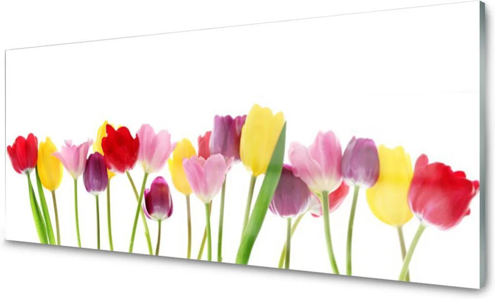 Obraz na akrylátovom skle Tulipány Kvety Rastlina