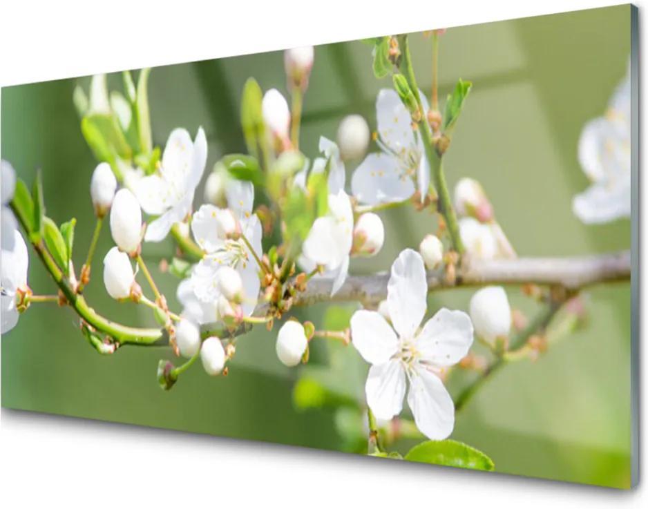 Plexisklo obraz Květiny větve listy sad