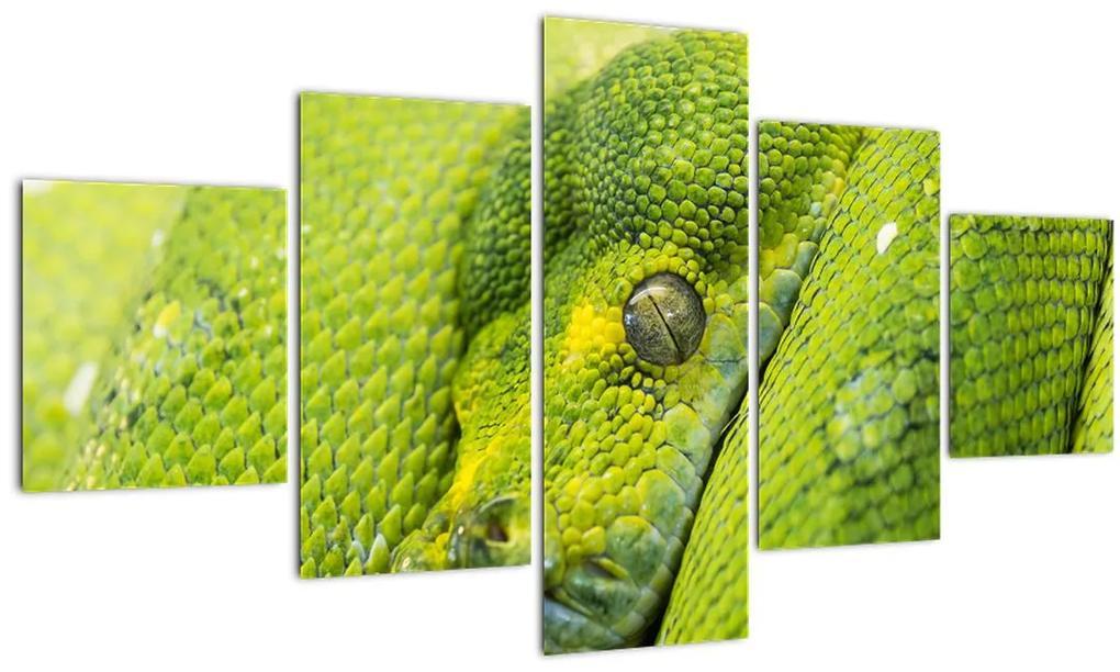 Obraz hada (125x70 cm), 40 ďalších rozmerov
