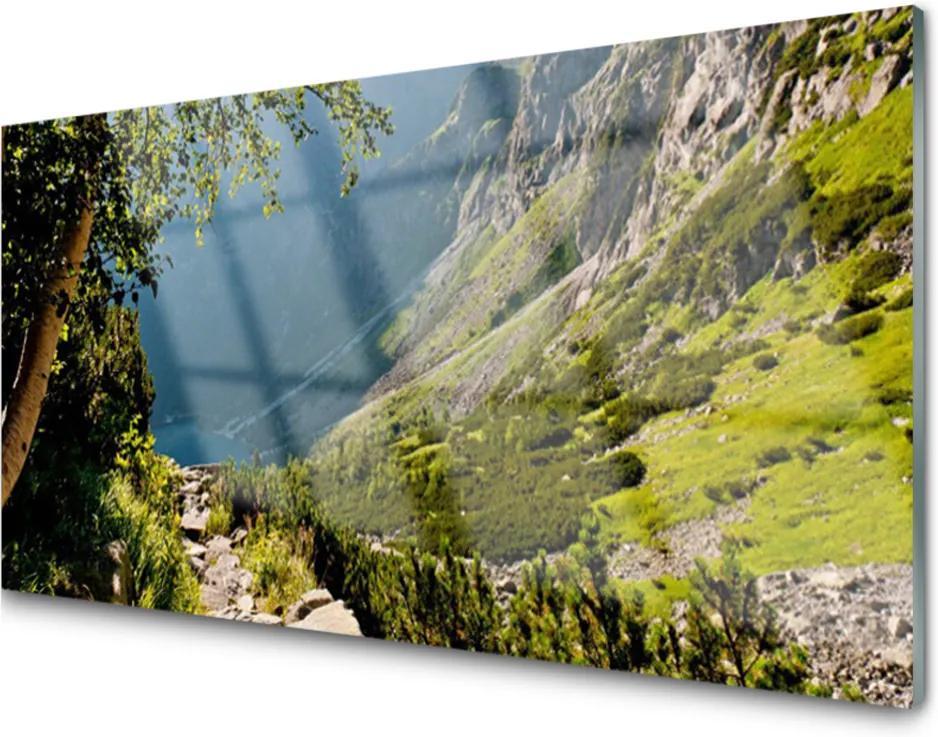 Plexisklo obraz Skleněný hora les příroda