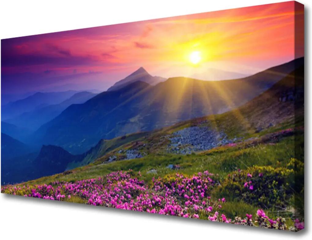 Obraz na plátně Hory Kvet Lúka Krajina