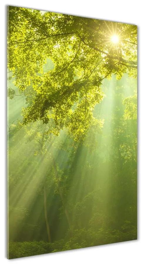 Foto obraz akryl do obývačky Slnko v lese pl-oa-70x140-f-88868942
