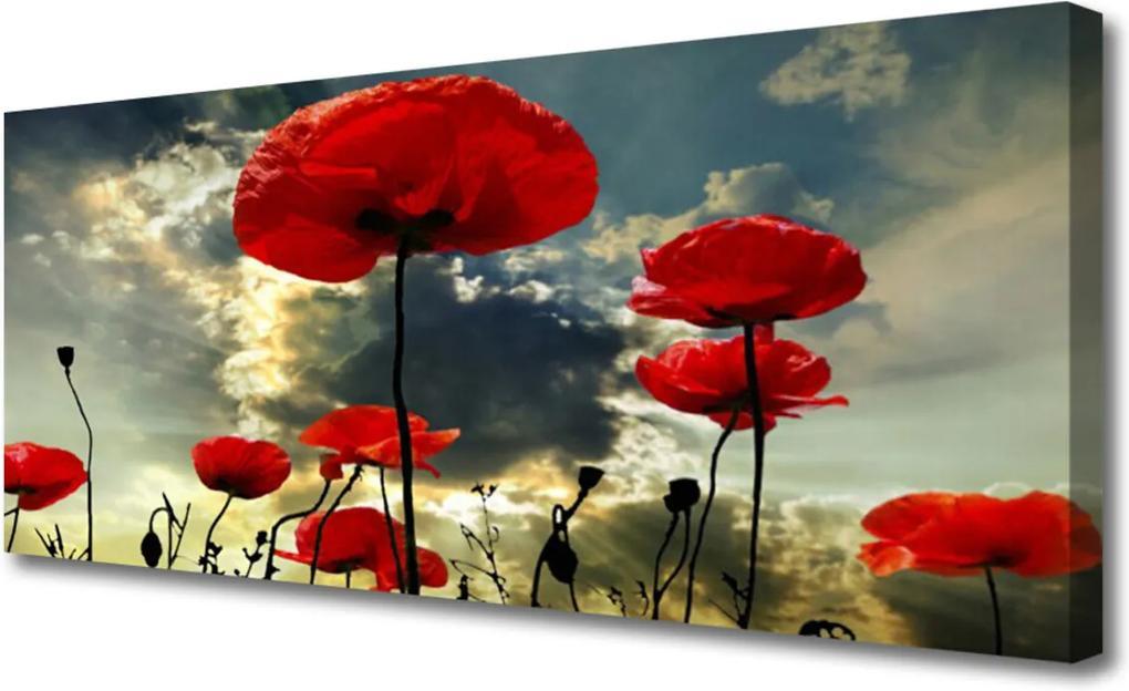Obraz Canvas Máky květiny příroda