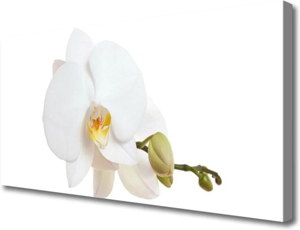 Obraz Canvas Kvet Rastlina Príroda