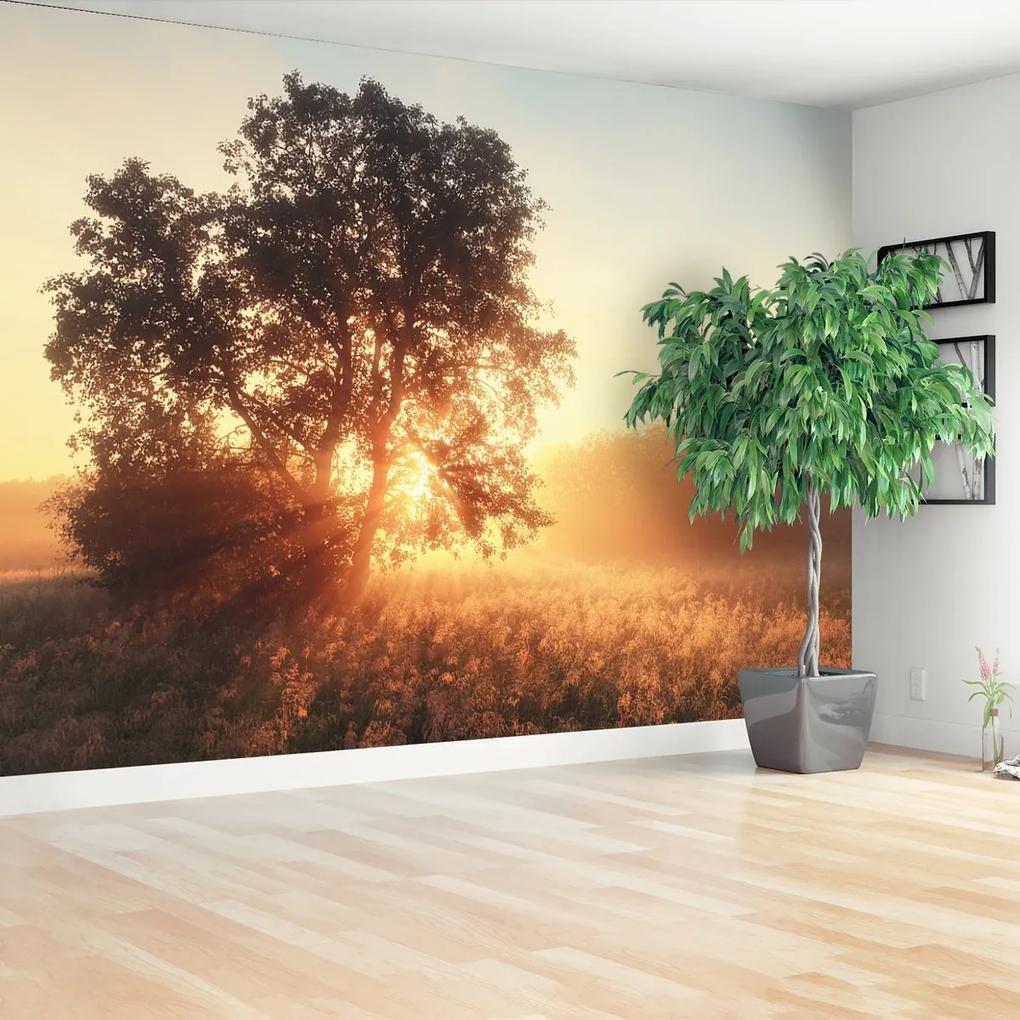 Fototapeta strom slnko