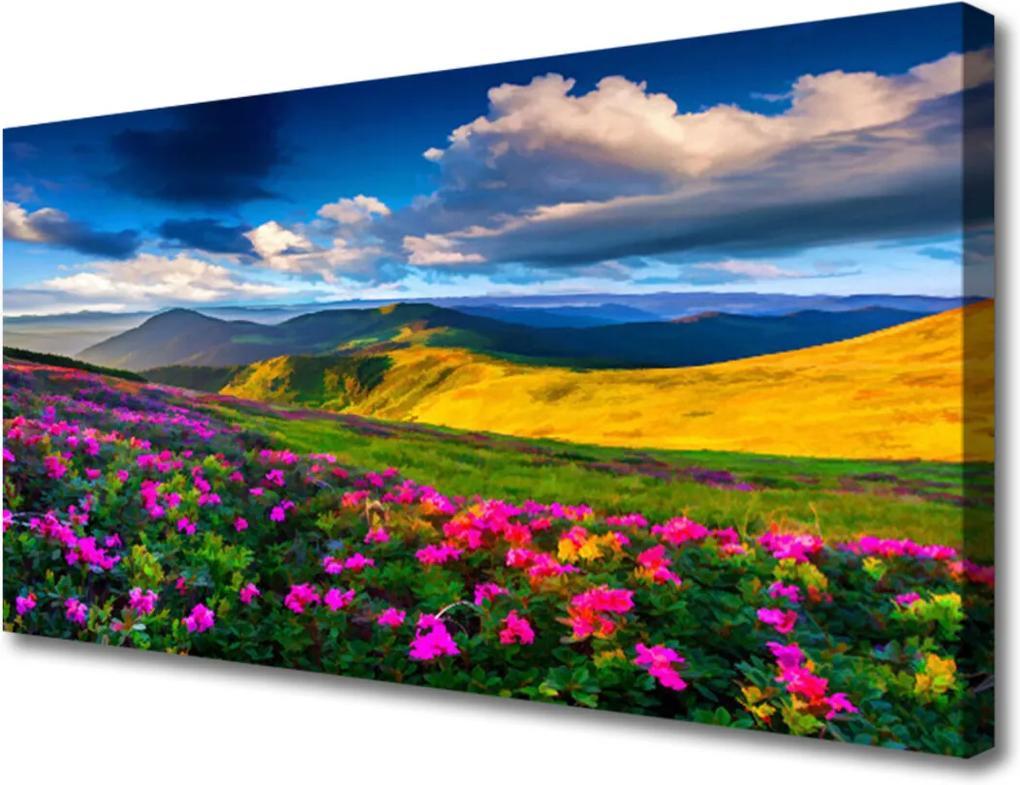 Obraz na plátně Lúka Kvety Príroda