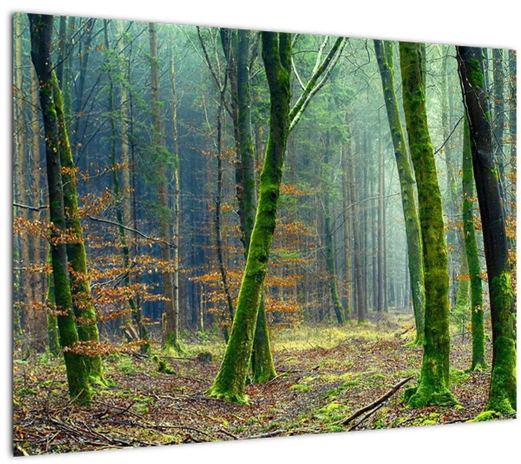 Obraz lesa (70x50 cm), 40 ďalších rozmerov
