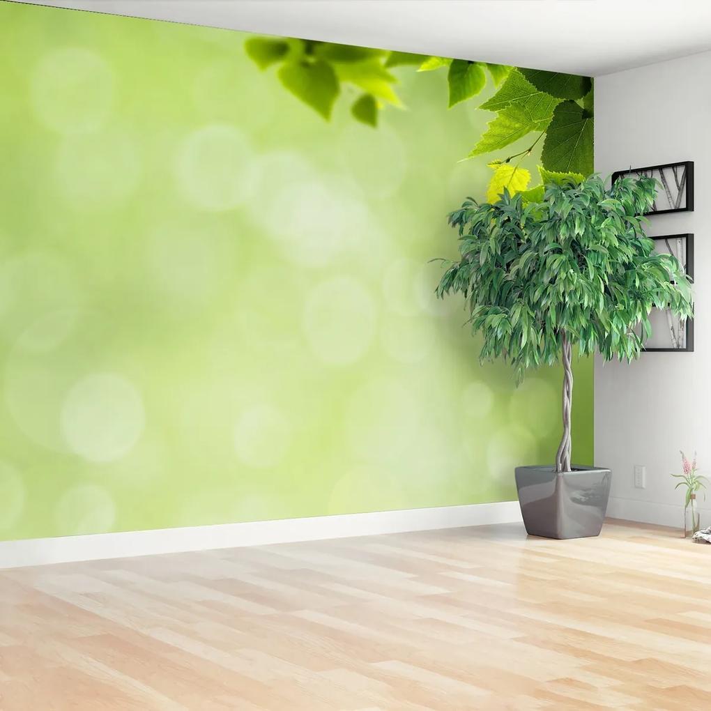 Fototapeta Zelené listy