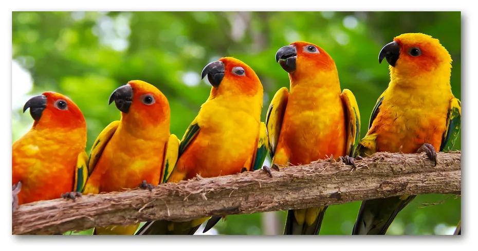 Foto obraz akryl do obývačky Papagáje na vetve pl-oa-140x70-f-68805637