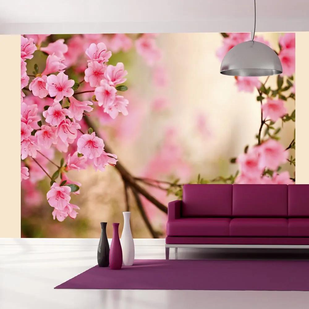 Fototapeta - Pink azalea 200x154