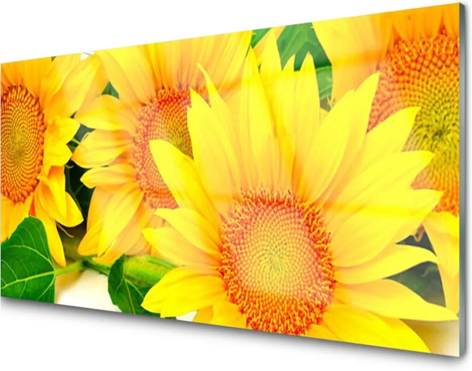 Skleněný obraz Slnečnica Kvet Príroda