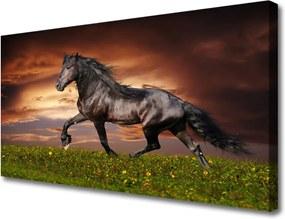 Obraz na plátně Čierny Kôň Lúka Zvieratá