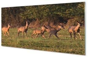 Nástenný panel Deer Golf svitania 100x50cm