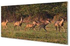 Nástenný panel Deer Golf svitania 120x60cm