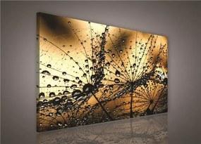 Obraz na plátne, rozmer 75 x 100 cm, rosa, IMPOL TRADE PP415O1