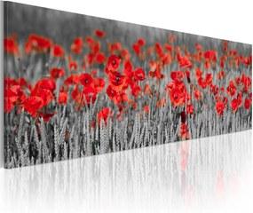 Obraz na plátne Bimago - Poppies among fields of wheat 120x40 cm