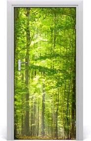Fototapeta na dvere  bukový les