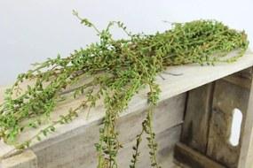 Zelený umelý trs rastliny senecio 70cm