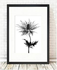 Obraz Tablo Center Thistle Vibes, 24 × 29 cm