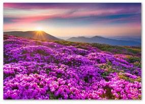 Obrázok fotografia sklo akryl Kvety v horách pl-oa-100x70-f-70454274