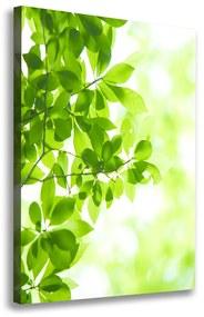 Foto obraz na plátne Zelené lístie pl-oc-70x100-f-69074600