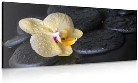 Obraz Zen kamene so žltou orchideou