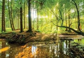 Vliesové fototapety, rozmer 104 x 70,5 cm, les a potok, IMPOL TRADE 10513 VEM