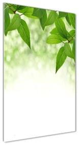 Foto obraz akryl do obývačky Zelené lístie pl-oa-70x140-f-51811576